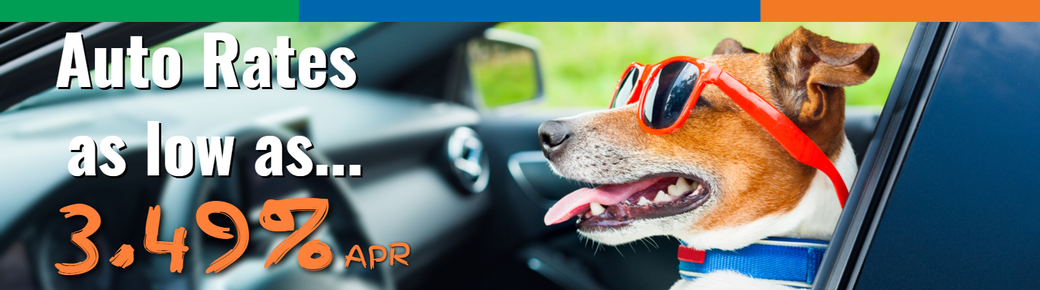 "Picture of a dog driving a car with text that reads ""Auto rates as low as 3.49% APR""."